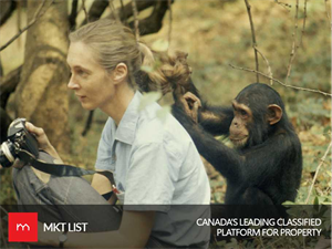 Jane Goodall's Life with Chimpanzees Highlighted in a New Documentary!