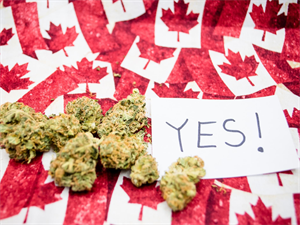 Cannabis Legalization: These Rules and Regulations Must be Followed!