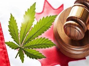 This is How the Cannabis Legalization Will Differ from Province to Province!