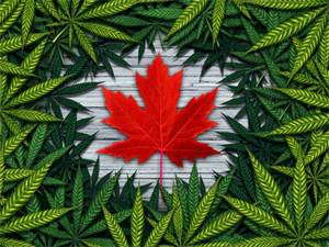 Things You Need to Know Before the Official Legalization of Cannabis in October!